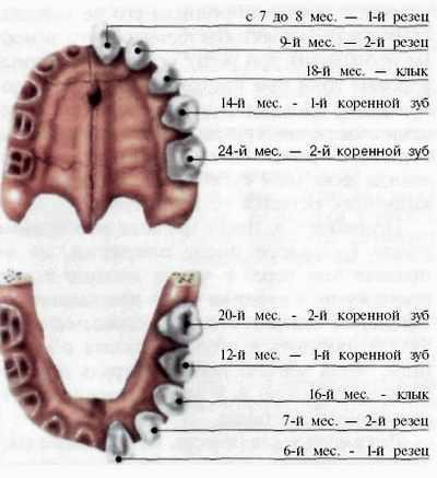 Как увидеть что лезут зубки фото